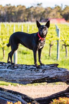 A sensory garden at Whicher Ridge winery in Western Australia Caper Berries, Sensory Garden, Low Maintenance Garden, Shed Design, Edible Plants, Australian Homes, Sauvignon Blanc, Terracotta Pots