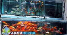 Aquarium Air Tawar