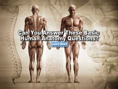 Can You Answer These Basic Human Anatomy Questions?