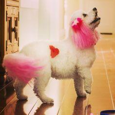 -Repinned- Color chalking- PetSmart Grooming salon.