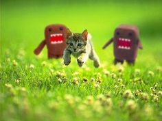 Domo and kitten love.