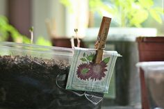 quick, easy way to remember what seeds you planted!