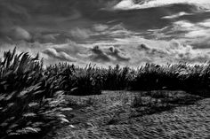 Meadow of 'Kash'