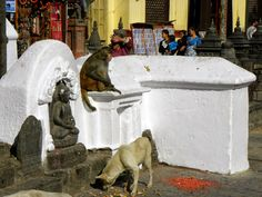 dog & monkey, Swayambhunath Temple or Monkey Temple - Kathmandu, Nepal