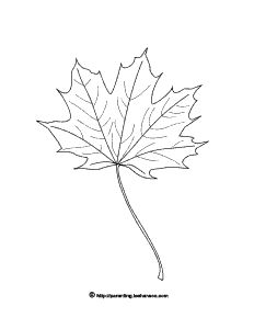 Fall season, autumn leaves coloring page with line drawing maple leaf picture to color. Leaf Coloring Page, Colouring Pages, Coloring Books, Maple Leaf Pictures, Embroidery Patterns, Quilt Patterns, Leaf Cards, Autumn Crafts, Digi Stamps