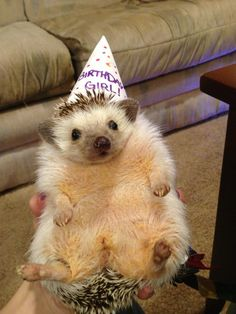 30 Pets Who Are Ridiculously Happy to Be Celebrating Their Birthdays