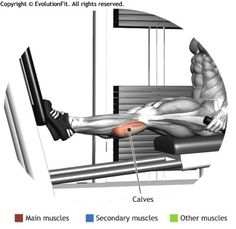 CALVES -  CALF ON ORIZONTAL PRESS