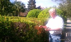 Gary Hill, our Director of Techinical Services takes a look at a hedge to see what's the problem #mainscape