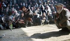 Games people play: Afghan men watch a cock-fighting tournament in Kabul.