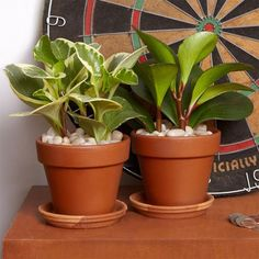 We've avoided houseplants in the past (NYC apartments are crammed enough as is), but The Sill is changing the way that we buy and display greenery. The start-up specializes in appropriately city-size...