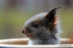 squirrel squirrel entertaining