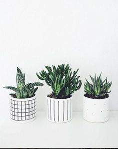 Office Plants I love the simplicity of these planters for small succulents! Small Cactus, Cacti And Succulents, Cactus Plants, Apartment Plants, Office Plants, Bedroom Plants, Little Plants, Painted Pots, Plant Design