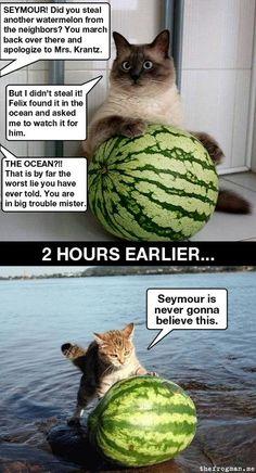 Watermelon in Ocean