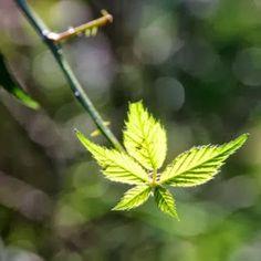 MadeByMaly Autumn, Plants, Fall Season, Fall, Plant, Planets