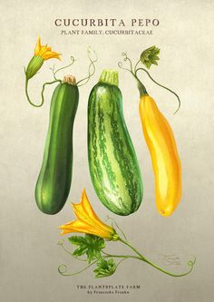 'Cucurbita Pepo' by Franziska Franke on artflakes.com as poster or art print $20.09