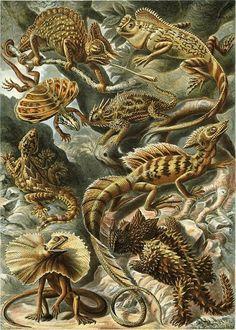 Ernst Haeckel - Lacertilia