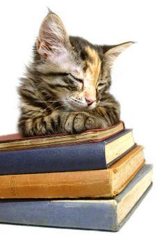 Worlds Cutest Kitten Photography at ArtistRising.com