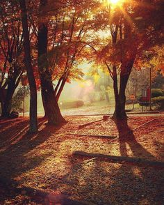 Autumn love. . .