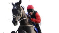 Saphir to make hurdles switch - Horse Racing - Erupt Sports