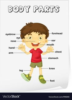 Human body parts poster for kids Body Parts Preschool Activities, Senses Preschool, Body Preschool, Numbers Preschool, English Activities, Toddler Learning Activities, Language Activities, Preschool Classroom, Listening Activities