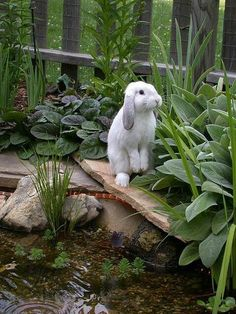"Cute bunny near water, ""Just one nibble..."""