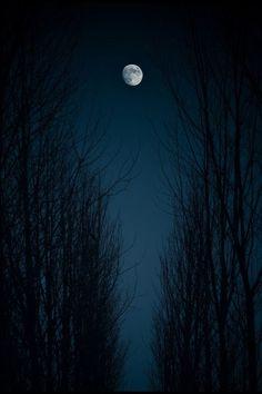 misty moonlight…via pinterest