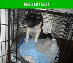 Great news! Happy to report that Scooch has been reunited and is now home safe and sound! :)