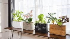 Hydroponic gardening has roots in ancient history. Six kinds of hydroponic gardening systems and planters include home aeroponics and tabletop aquaponics. Modern Planters, Wood Planters, Indoor Planters, Planter Boxes, Herb Planters, Window Plants, Window Sill, Potted Plants, Window Ledge