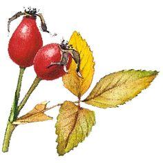 Rostliny - ŠKOLÁKOV Stuffed Peppers, Vegetables, Stuffed Pepper, Vegetable Recipes, Stuffed Sweet Peppers, Veggies