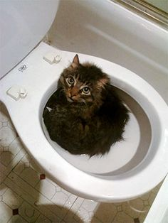 Google Image Result for http://cdn-media.ellentv.com/archive/images/blog/1010/26-toilet-cat-best-pet.jpg