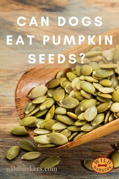 Yes, dogs can eat pumpkin seeds (or pepitas), and they are highly beneficial for your dog. Pumpkin is a superfood for your dog. Before you give your dog pumpkin seeds, make sure that they are prepared. We recommend peeling and roasting your seeds. Pumpkin seeds go moldy quickly when raw. Can my dog eat pumpkin? Pumpkin is excellent for dogs! It is fantastic for dogs who have any tummy issues because it helps to calm their upset stomachs. Pumpkin is also full of fiber, which allows dogs to… Can Dogs Eat Pumpkin, Pumpkin Pumpkin, Dog Eating, Superfood, Your Dog, Roast, Seeds, Fiber, Calm
