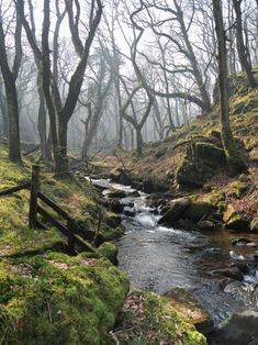 Misty morning in the woods, where a gentle stream meanders through endless wonders of nature....