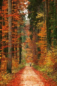 "agoodthinghappened: "" fall by ~swissloko """