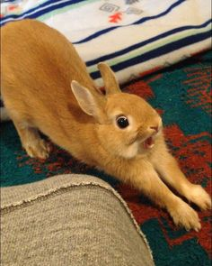 You scared the rabbit juice out of me Felt Animals, Animals And Pets, Baby Animals, Funny Animals, Cute Baby Bunnies, Cute Babies, Rabbit Pictures, Bunny Cages, Raising Rabbits