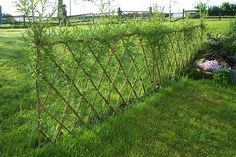 Living Willow Fence, Sturdy but Transparent Garden Arbor, Veg Garden, Garden Fencing, Garden Landscaping, Bamboo Trellis, Bamboo Plants, Bamboo Fence, Living Willow Fence, Privacy Plants