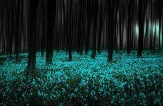 Mystical Forest, England