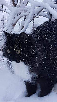 Beauty in the snow ❤