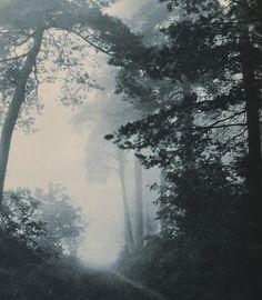 beautiful forest #jenniferwarthan