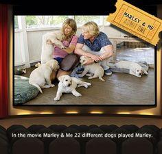 Marley eu mostra um pouco de como a vida com a companhia de um marley eu mostra um pouco de como a vida com a companhia de um labrador na tela pinterest fandeluxe Images