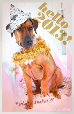 Rhodesian Ridgeback German Shepherd Holiday Dogs Happy New Year Puppy Puppies Merry Christmas Long Holiday, Holiday Break, My Best Friend, Best Friends, Rhodesian Ridgeback, Creature Feature, New Year Card, New Years Party, Photography Projects