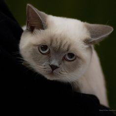 """""""Warm your heart and soothe your soul.  Love a cat."""" --Connie MacPherson"""