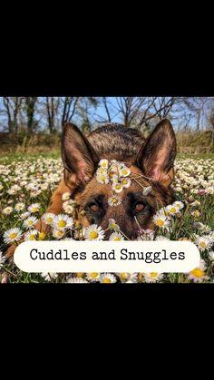 Cuddles And Snuggles, Cuddling, Daisy, Cover, Physical Intimacy, Margarita Flower, Daisies, Cuddles, Hug