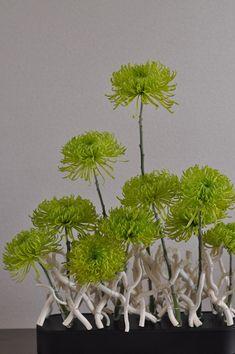 Chrysanthemum, Morus latifolia