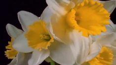 ''Flores en Movimiento''' (Michel PéPé Music) Nature Music, Rose, Flowers, Youtube, Plants, Pink, Plant, Roses, Royal Icing Flowers