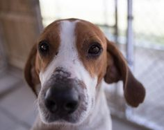 3/27. Meet Terrance, a Petfinder adoptable Hound Dog | Greensburg, PA