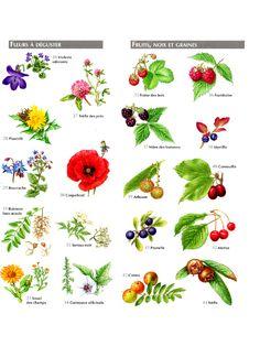 Aperçu du fichier Petit Atlas Des Plantes Comestibles PDF.pdf Permaculture, Horticulture, Botany, Flora, Green, Nature, Buffets, Infographics, Art Ideas