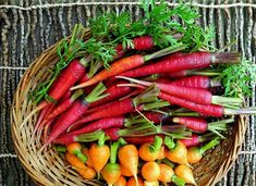 Rainbow Carrot Mix seven fancy heirlooms 350 seeds by SmartSeeds Kyoto, Compost, Fancy, Still Tasty, Loose Weight Fast, Baby Carrots, Crazy Colour, Spring Garden, Garden Fun