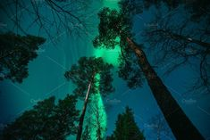Northern Lights above Forest by skamely on Tree Forest, Our World, Finland, Aurora, Fountain, Northern Lights, Aquarium, Around The Worlds, Landscape