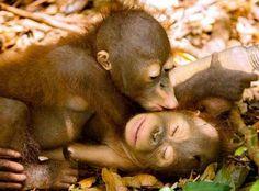 A....come abbracci B....come baci C....come coccole