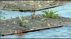 Floating Wetland Project To Improve Water Quality At Inner Harbor